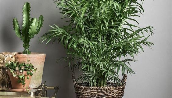 Живі рослини для сучасного дому